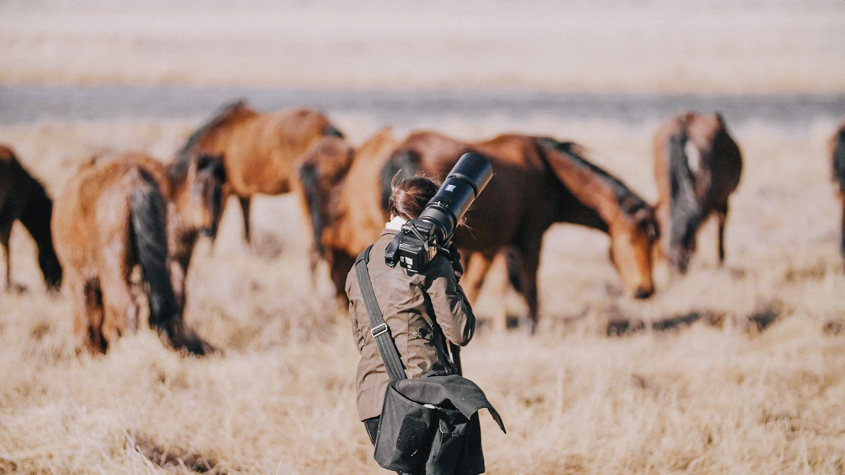 Wild horses in Northern Nevada on location with photographer KT Merry
